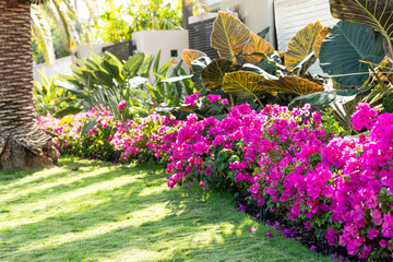 Landscape Design West Palm Beach